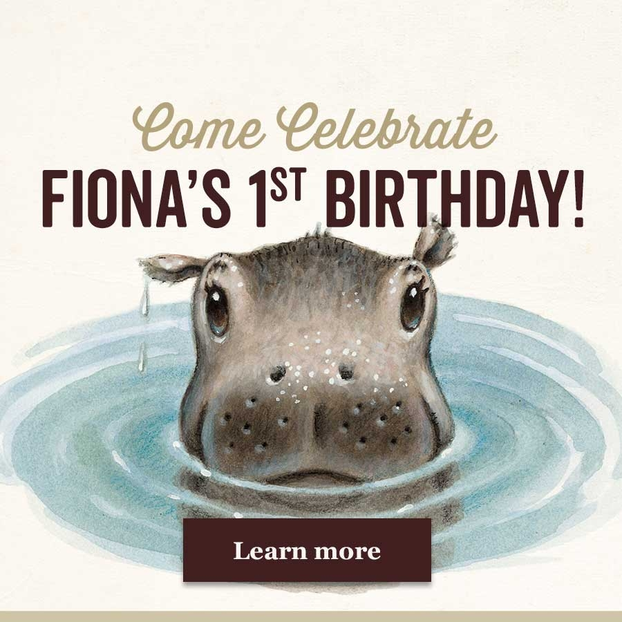 Celebrate Fiona's First Birthday