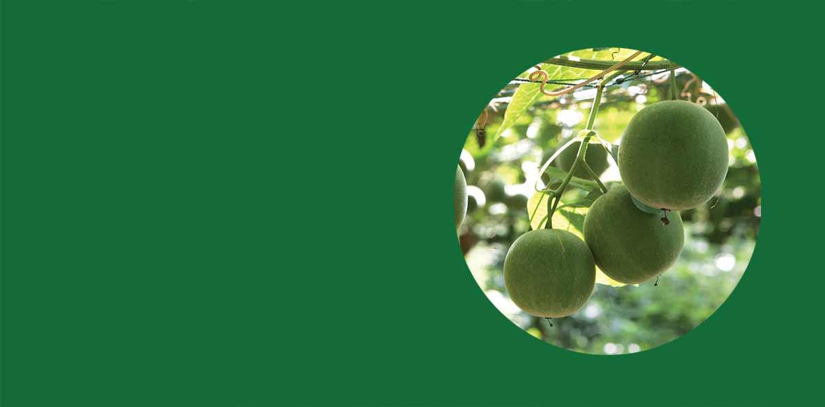 Meet the magical monk fruit