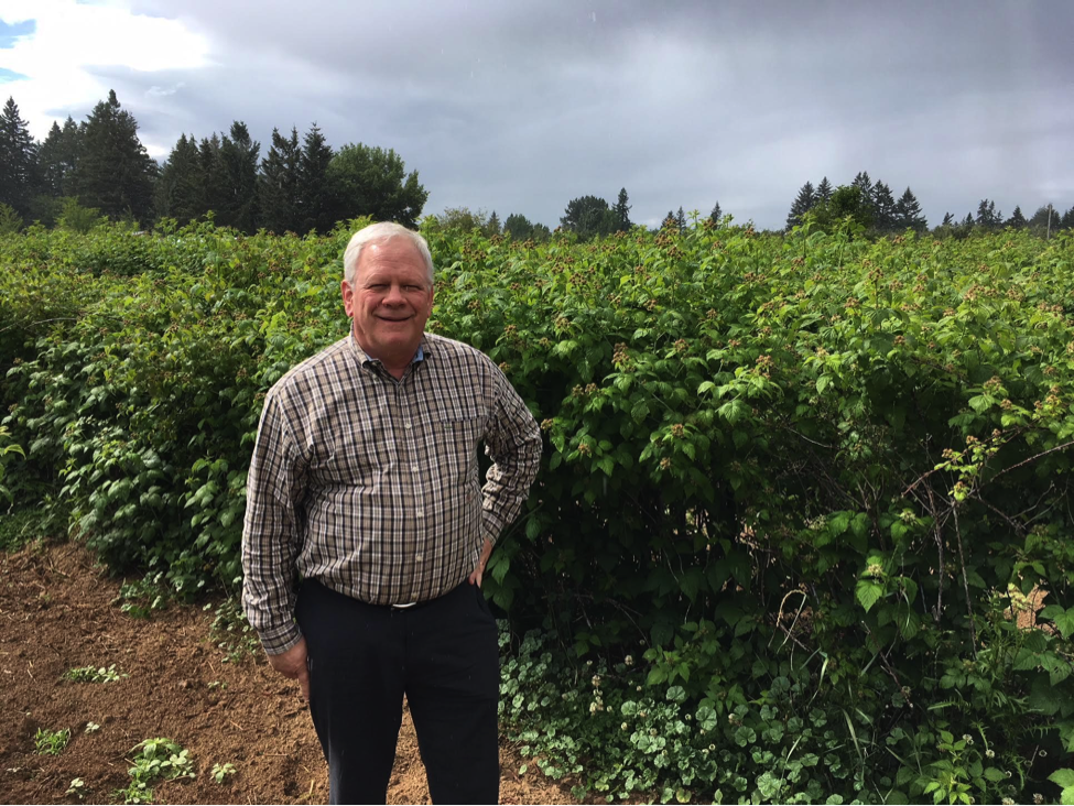 Bob Graeter in Oregon raspberry field